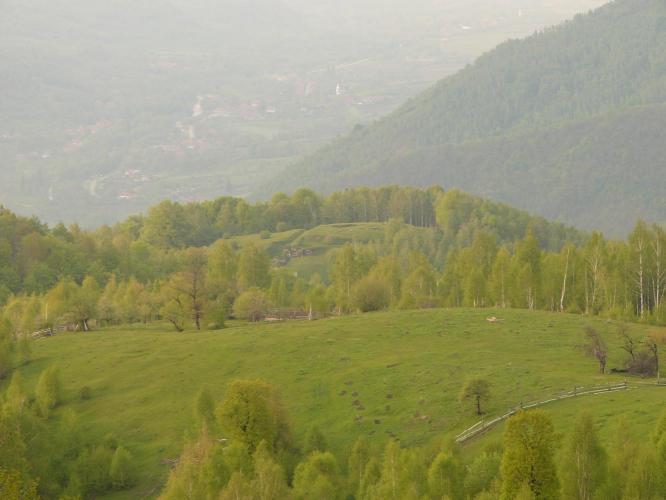 Blidaru