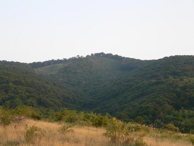 Tornya